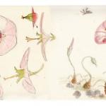 Crood_Carnivorous_Flowers_01d_takao_noguchi